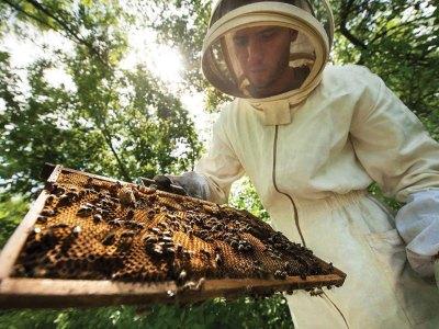 Bee Farm Tour