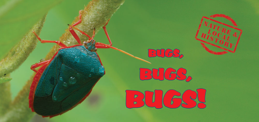 Bugs Bugs Bugs header