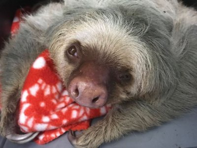 Dolly was rescued after being electrocuted. Luckily, TSI was able to save her injured eye.