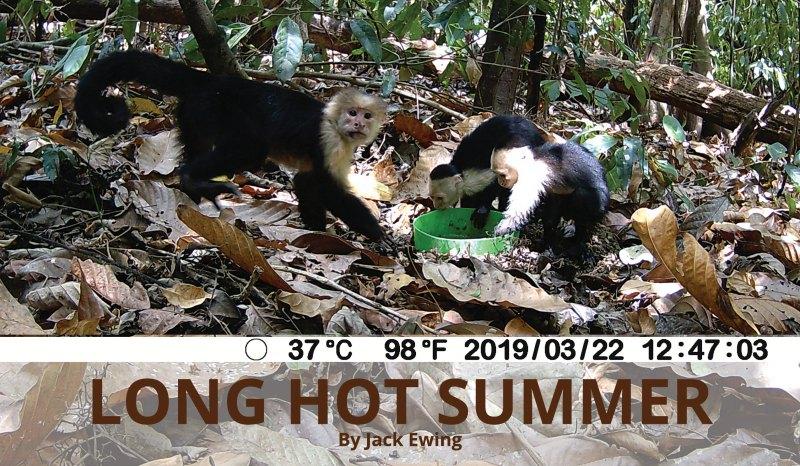 Long Hot Summer header