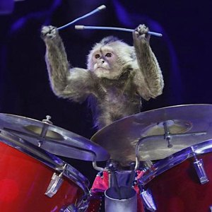 Monkey playing drums