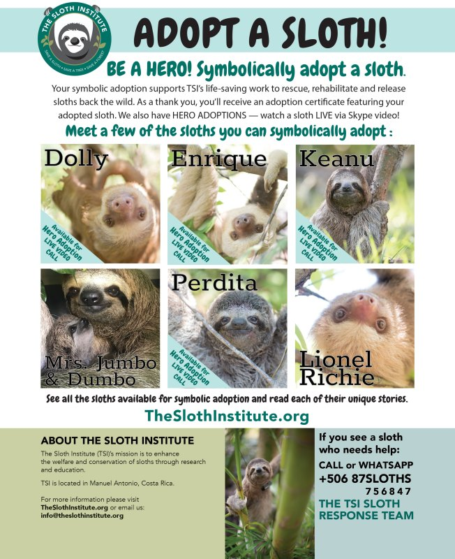 Adopt a Sloth flyer