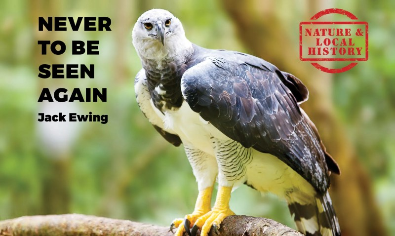 Never to be seen again header with a Harpy Eagle