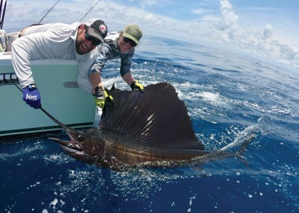 Two men holding a sailfish
