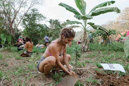 Young woman planting a tree