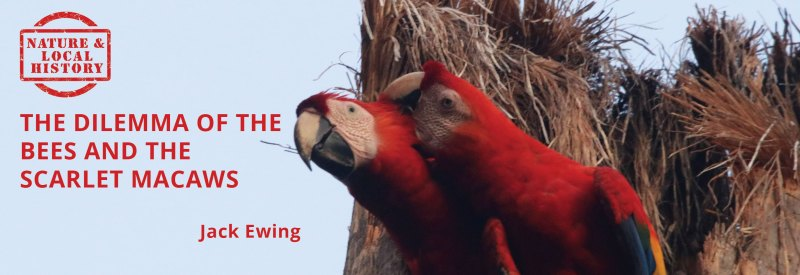 The dilemma of the bees and the scarlet macaws header
