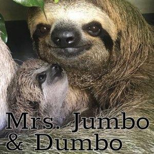 Mrs. Jumbo and Dumbo