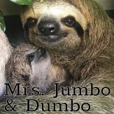 Mrs. Jumbo and Dumbo
