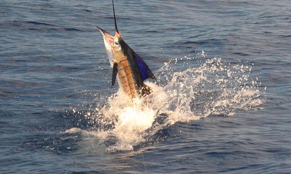 https://i0.wp.com/www.queposfishadventure.com/costaricafishing1212013a.jpg