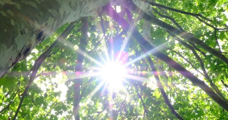 Was ist das Klima? Ein Waldspaziergang mit Zeugen erklärt Kindern das Klima