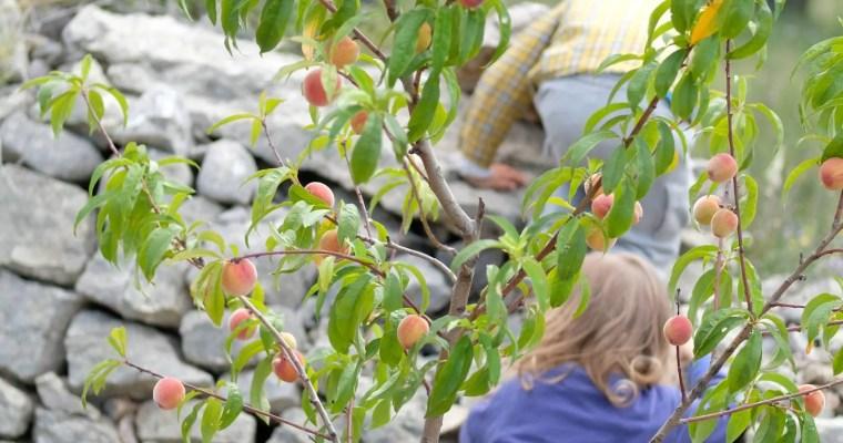 Effizienzdenken zuhause lassen: Naturverbundenheit braucht elterliche Begeisterung