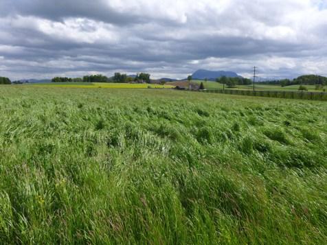 Mitten durch diese Seetaler Landschaft würde die geplante Talstrasse führen.
