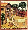 Tacuinum Sanitatis ordeño y elaboración de queso en la Edad Media