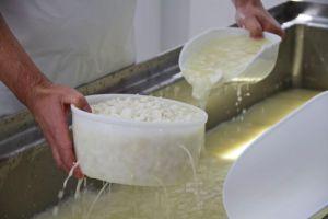 Alérgenos en el queso