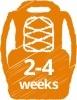 2-4-weeks