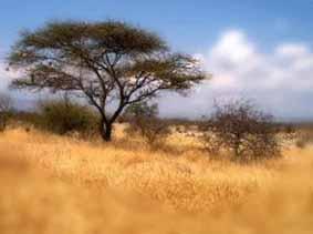 Quia  Vegetationszonen Afrikas