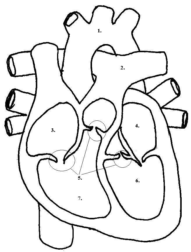 Label Heart Diagram Worksheet Pdf, Label, Free Engine