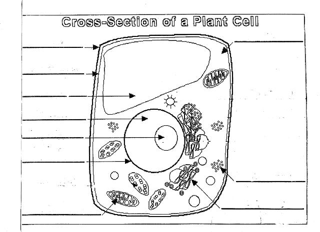 cell diagram plant