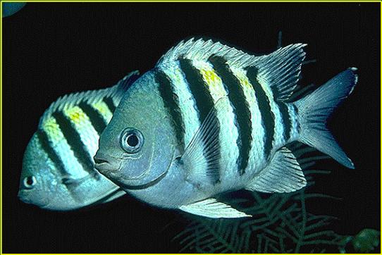 Quia  Fish Identification EKO 3