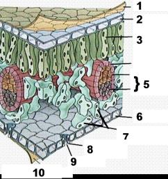 what are the 2 types of tube like cells found inside the vein labeled 5 called  [ 1202 x 817 Pixel ]