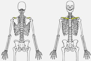 Quia  The Skeletal System