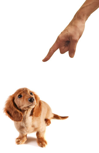 The Dog Trainer  Should You Punish Your Dog  Dog