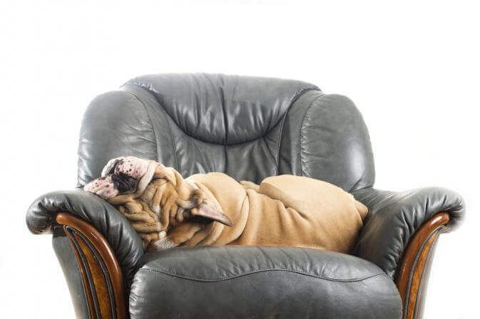 The Dog Trainer How To Keep Dogs Off Furniture Quick And