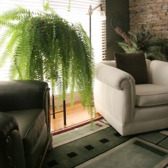 Chair For Bathroom Ll Bean Chairs Outdoor 10 Common Houseplants And How To Take Care Of Them - Zing Blog By Quicken Loans | ...