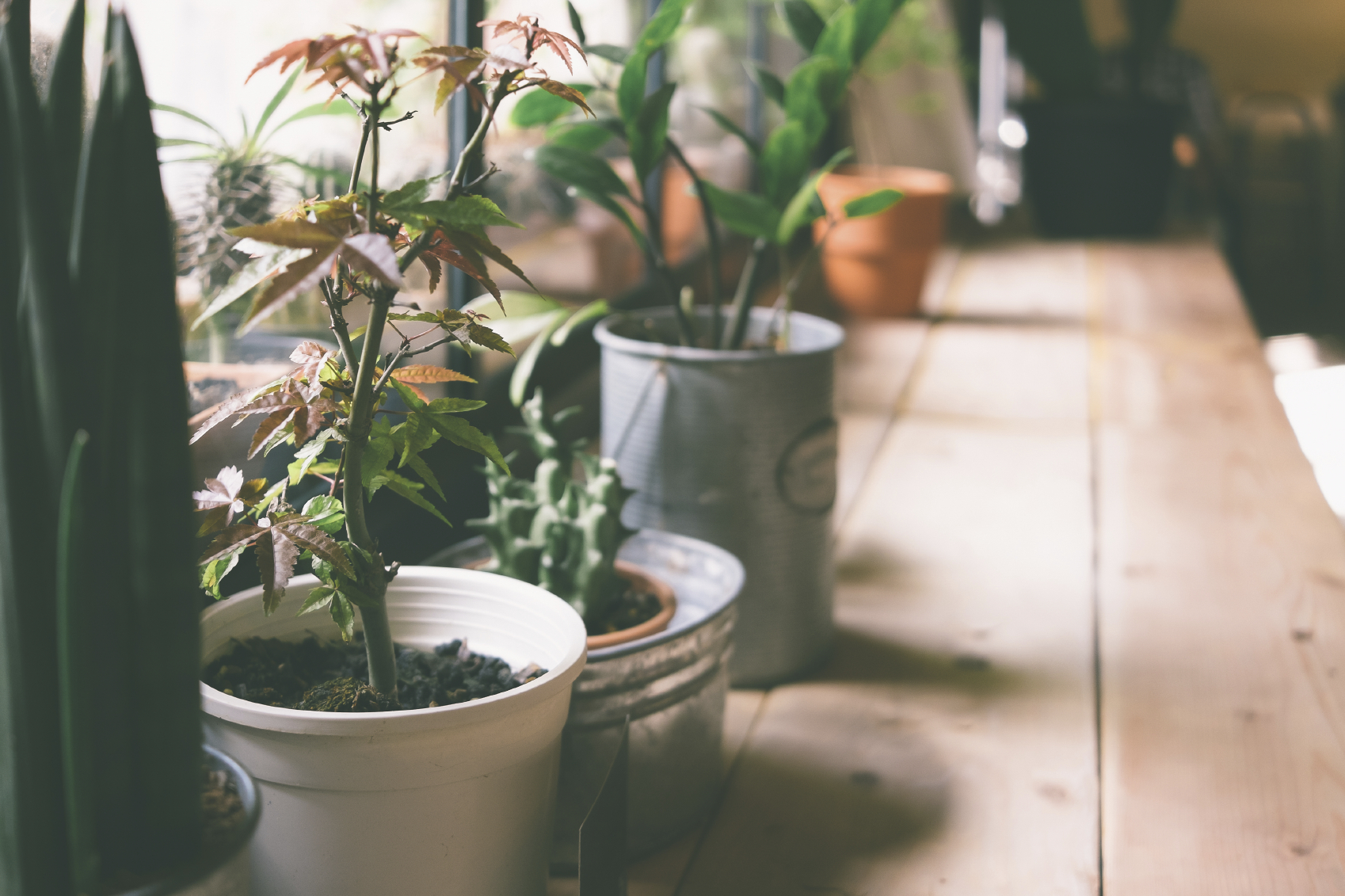 10 Common Houseplants And How To Take Care Of Them Zing Blog By Quicken Loans Zing Blog By