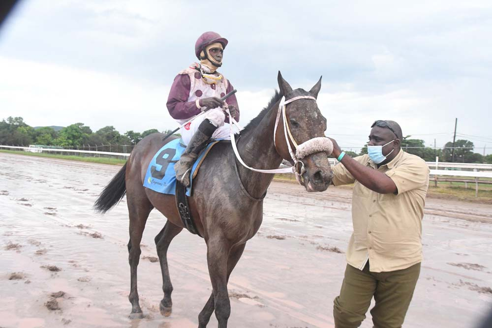 King Arthur - Phillip Parch on their return after winning the 2020 Jamaica Derby.