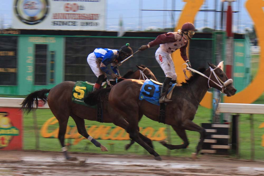Jockey Phillip Parchment stands tall in the saddle as he wins the 100th running of the Jamaica atop King Arthur. (Photo: Kimberly Bartlett)