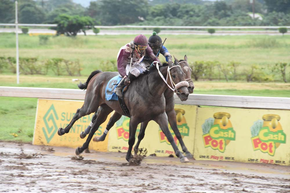 King Arthur (Phillip Parchment) getting by Nipster to win the 100th running of the Jamaica Derby.