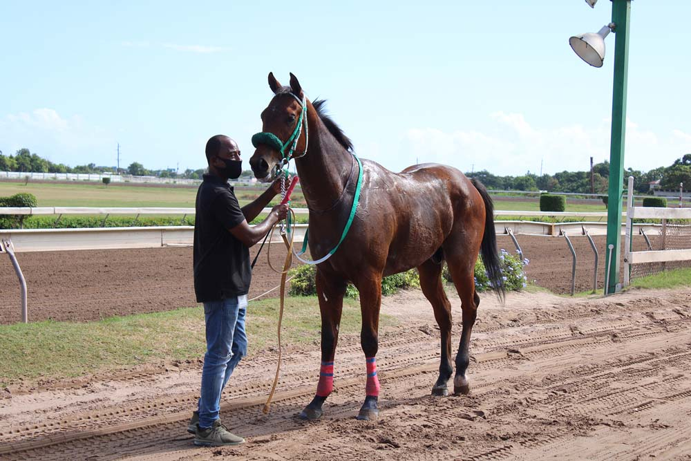 Broken Light after his maiden win being led back home. (Photo: Kimberly Bartlett)