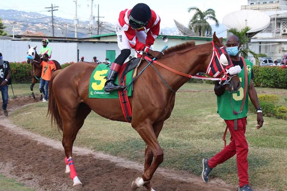 Jockey Linton Steadman jumps aboard Excessive Force