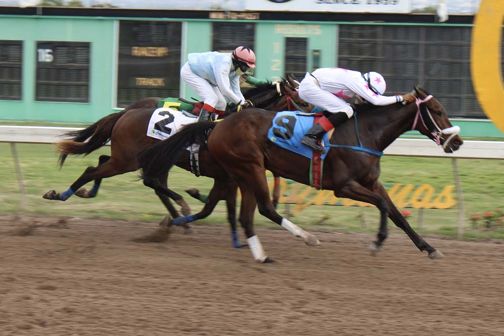 Portion with jockey Roger Hewitt winning th first race of 2021 (Photo: Kimberly Bartlett)