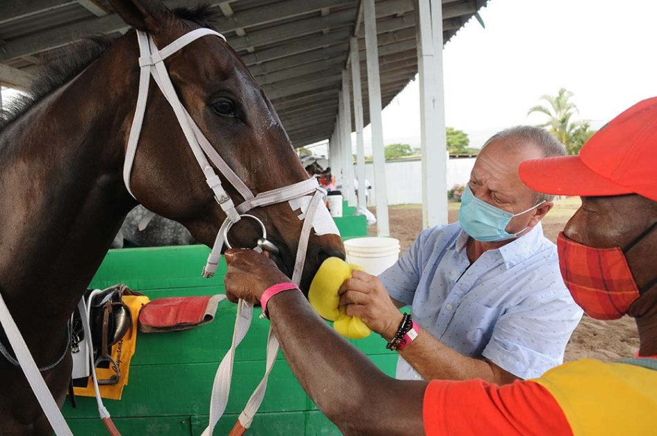 Trainer Gary Subratie (left) and groom Claude Thompson prepare Crimson for his racing engagement.