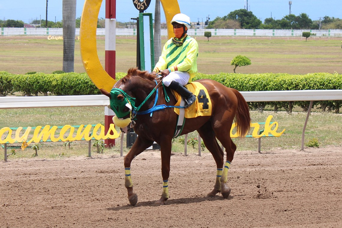 A respectful looking  Another Cookie (Youville Pinnock) after winning the Caymanas Saturday second. (Photo: Kimberly Bartlett)