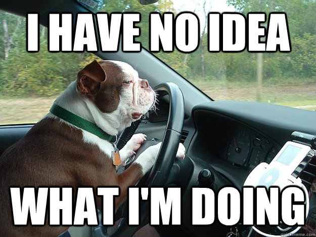 I Have No Idea What Im Doing Dog Driving Quickmeme