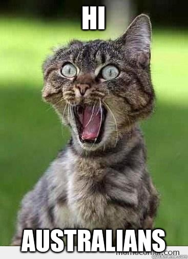 hi australians excited cat