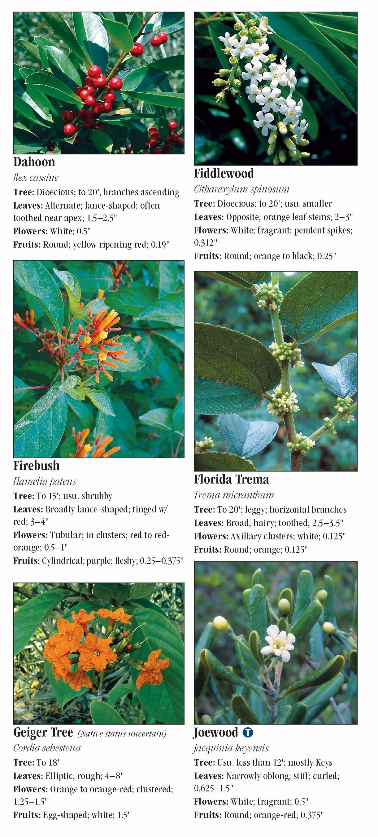 Trees Of South Florida Quick Reference Publishing