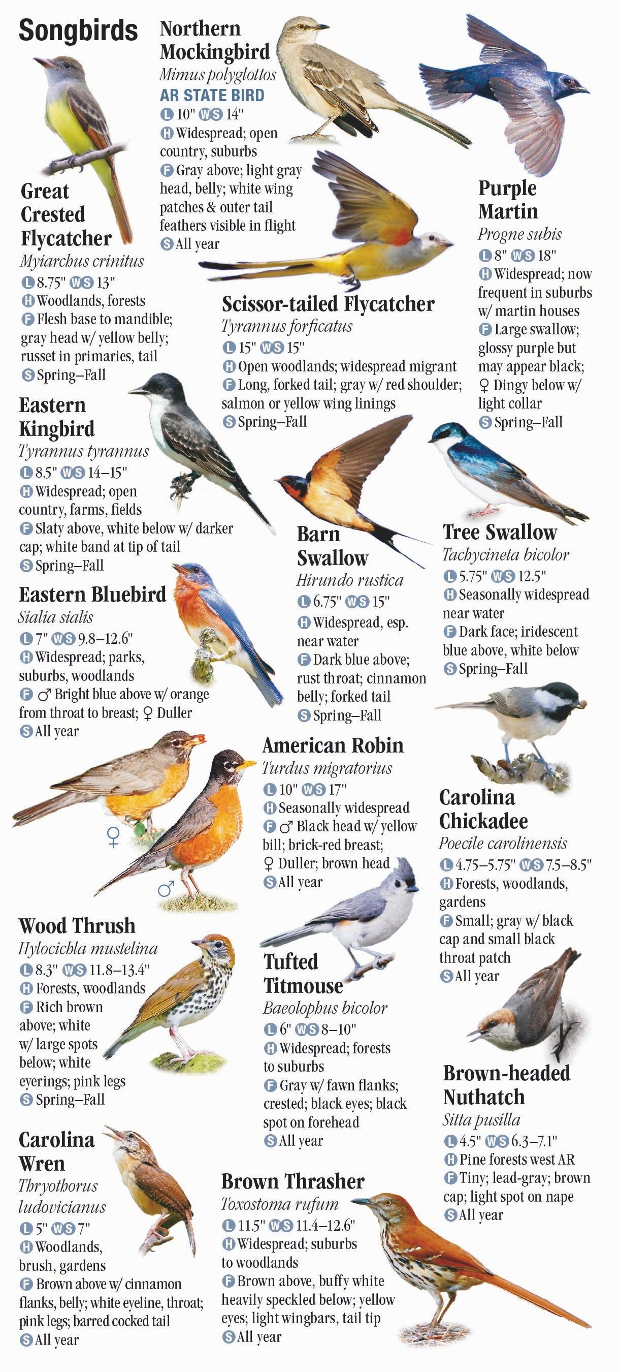 Birds Of Arkansas Quick Reference Publishing