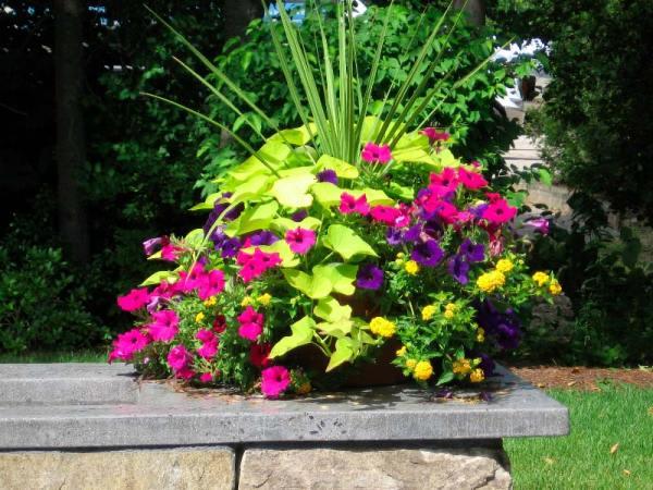 quiet corner container gardening