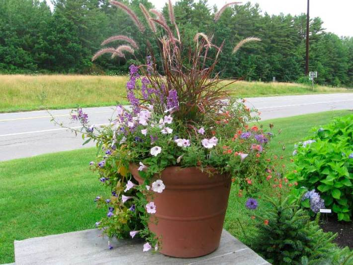 Container-Gardening-Ideas-5