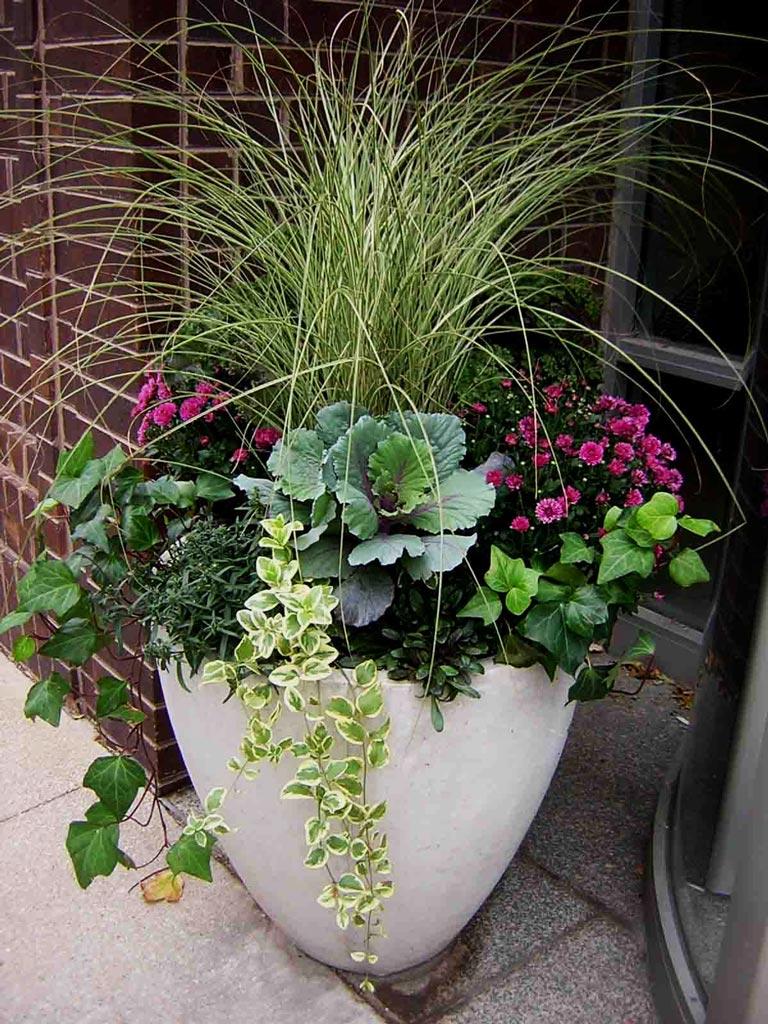 Quiet Corner:Container Gardening Ideas