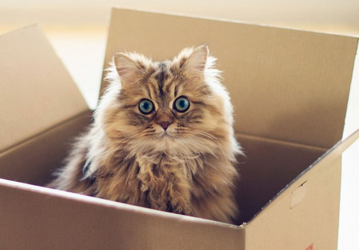 Moving With Cat