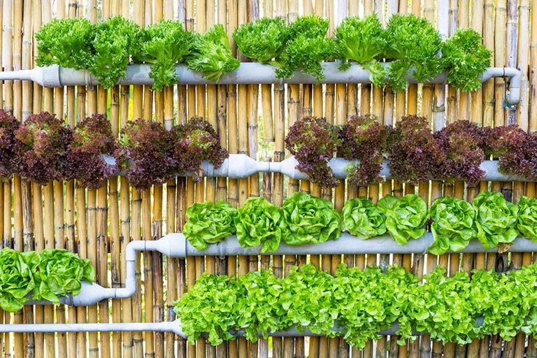 Vertical Vegetable Garden Ideas Quiet Corner