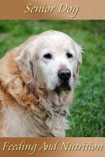 Senior Dog - Feeding And Nutrition