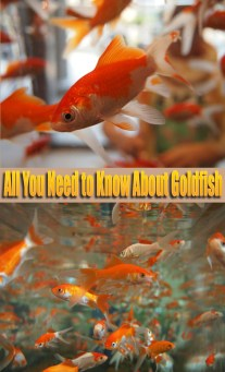 All You Need to Know About Goldfish