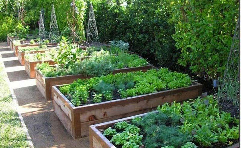 Quiet corner vegetable gardening with raised beds quiet for Corner vegetable garden ideas
