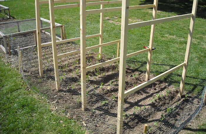 Vegetable Garden - Planning, Designing and Growing